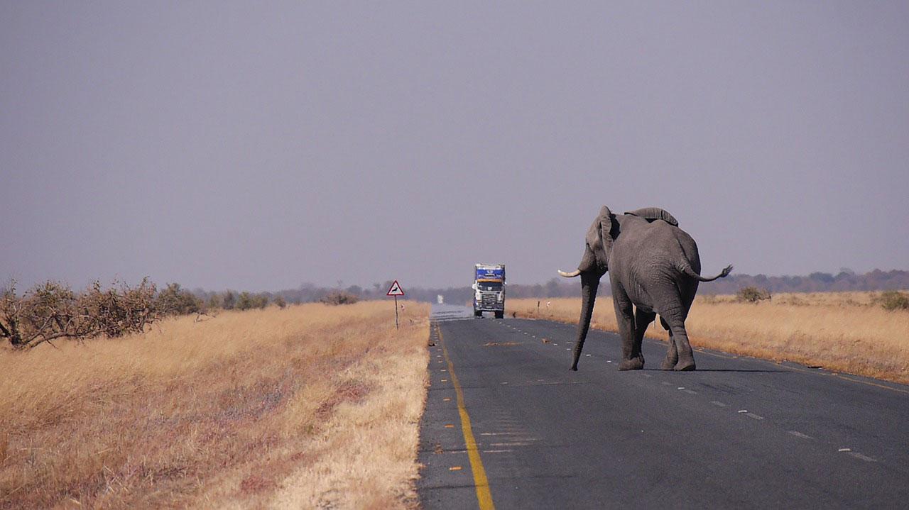 Abenteuer Reiseziele: Botswana